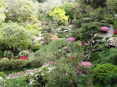 HannahCarterJapaneseGarden.jpg